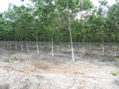Bán 22hecta đất cao tân uyên, bình dương giá 1 tỷ 200 triệu/