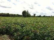 Bán 4.6 ha đất dọc kênh tây, huyện dương minh châu, tây ninh