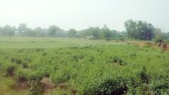 Bán 3ha đất mặt hồ đẹp phù hợp làm trang trại hoặc nghỉ dưỡn