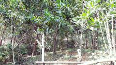 Cần bán lô đất thổ cư diện tích 5000m vị trí xóm chùa xã tiế