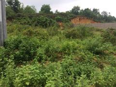 Cần bán lô đất mặt đường dt 1500m phù hợp làm nhà xưởng