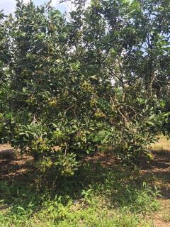 Bán 1ha vườn cây ăn trái. cách sân bay qt long thành 150m