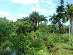 Bán đất thôn đồng vàng xã phú mãn huyện quốc oai hà nội