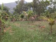 Cần bán gấp đất trồng cây thôn đắc lộc dt 220m2