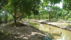 Vườn sinh thái cho năng suất trên 10 triệu đồng tại tp. trà