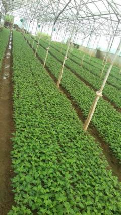 Bán gấp mãnh đất nông nghiệp 1.000 mét vuông