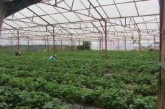 Chuyển đổi nghề,  cần bán gấp 1.200 mét vuông đất nông nghiệ