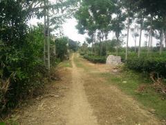 Cần bán 4000m đất yên bài ba vì làm trang trại trồng cây kết