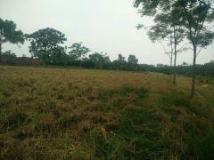 Cần bán 1,1 ha đất yên bài ba vì giá rẻ 2,1 tỷ đồng