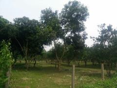 Cần bán gấp 1,7ha đất trang trại ngỉ dưỡng tại yên bài ba vì