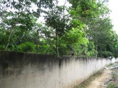Bán trang trại cây lấy gỗ - bà rịa vũng tàu - giá 1,3 tỷ