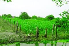 Đất trồng rau sạch tại bình chánh dt:từ 3000 -9000m2.