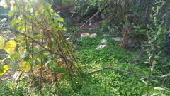 Bán đất thổ cư 31.3m2, mt 3.6m, cuối đường vũ tông phan