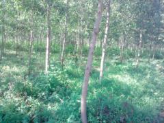 Đất trồng rừng lâm đồng 138ha giá cực rẻ 5 tỷ
