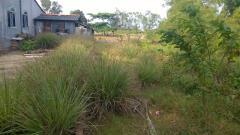 Dt 284m2 đủ để xd 1 ngôi nhà ở hoặc làm vườn tại bình chánh