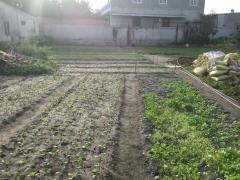 Đất trồng ngay nơ trang long-hồ tri tân, vũng tàu