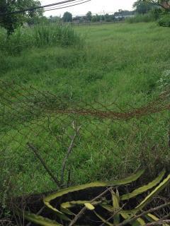 Đất gần chợ mỹ thạch chư sê dt 4 x 20,giá 240 trbao sang tên