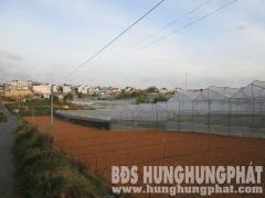 Cần bán gấp đất nông nghiệp hxh đường triệu việt vương  p3