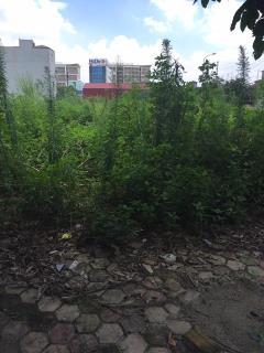 Bán đất tái định cư trâu quỳ 50m2 mặt tiền 4m,đường 12m