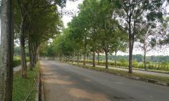Celadon city mở bán siêu phẩm emerald ck 10% + smart home