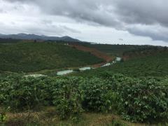 Cần bán đất làm trang trại huyện bảo lâm , lâm đồng