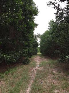 Bán đất trang trại nhơn trạch, mt vành đai 3