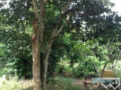 Bán 9300m2 đất thổ vườn mặt tiền tại định quán đồng nai.
