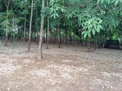 Bán 19.000m2 đất thổ vườn giáp suối tại đồng nai chỉ 2 tỷ.