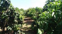 Bán 30.000m2 đất vườn đường nhựa sau giáp hồ ở đồng nai.