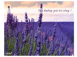 Tận hưởng giá trị cuộc sống tại chung cư Lavender