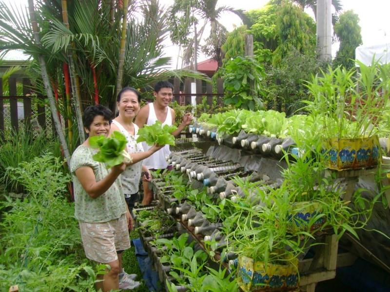 Vườn rau sạch tại dự án Nam Phong Ecopark