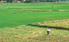 Cụ thể hoá việc xác định giá đất tại Hà Nội