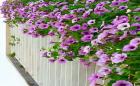 Mê mẩn ban công tầng 18 ngập tràn sắc hoa